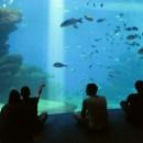 Пальма аквариум. Майорка